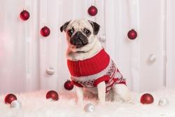 Christmas theme photoshoot with an adorable pug.