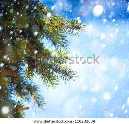 Christmas tree branch on a blue background