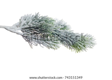 Christmas tree branch with snow, isolated on white