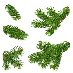 Christmas tree branches close-up, isolated without shadow. Set of natural elements for Christmas decor and decoration.