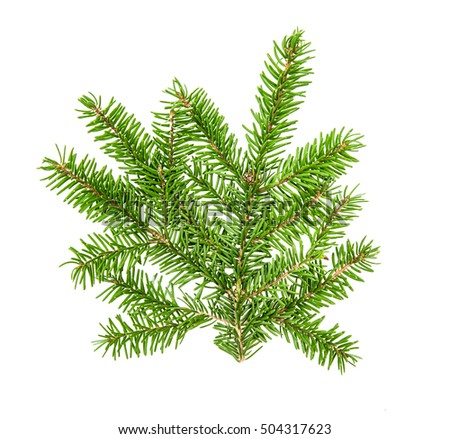 Christmas tree branches isolated on white background. Pine sprig. Fresh green fir #504317623