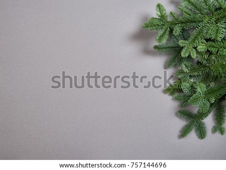 Christmas tree branches on gray background. Minimal winter backdrop #757144696