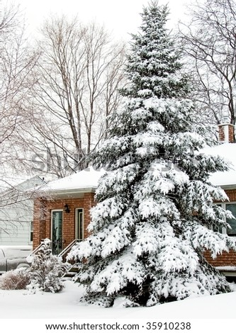 Christmas tree covered by snow after blizzard. Winter. Toronto, Canada.