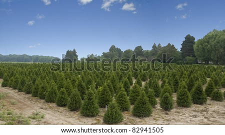 christmas tree farm in the country