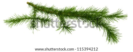 Christmas tree fir branch on white background #115394212