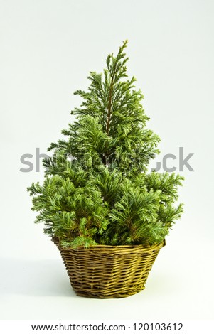Christmas tree in basket background
