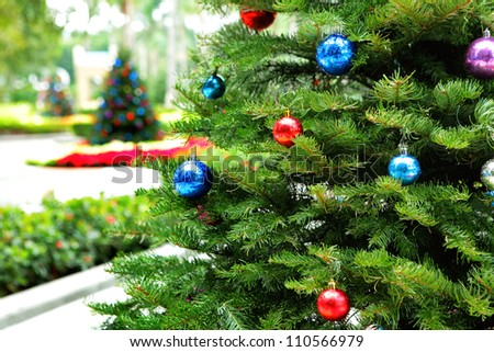 Christmas tree in garden