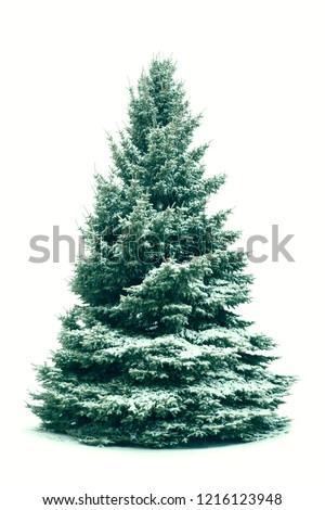 Christmas tree in snow isolated on white  background. Fir tree without decoration. #1216123948