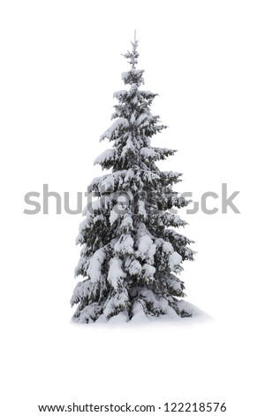 christmas tree   isolated on...