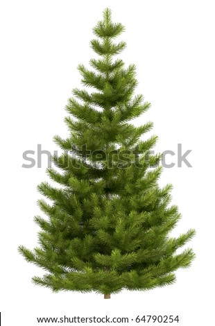 Christmas tree isolated on white background. High quality insulation