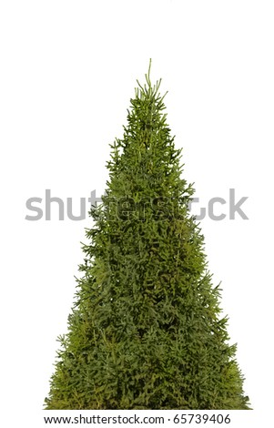 Christmas tree isolated on white  with photoshop path