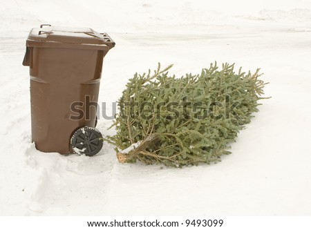 Christmas tree left lying by the dumpster in a snow
