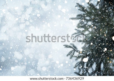 Christmas tree pine branch and snowfall on sky background. vintage color tone and rustic style. #736436929