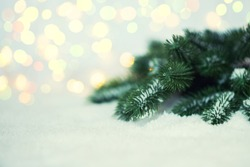Christmas tree pine branches and snow on a light background.