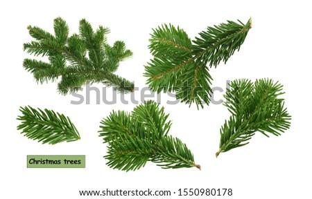 christmas trees isolated on white background #1550980178