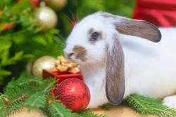 Christmas white bunny in red hat. Rabbit in red santa claus costume  on green background - animals, pets, new year concept. Clouseup. 2022