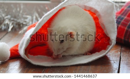 Christmas white rat in Santa Claus hat. Christmas rat or mouse