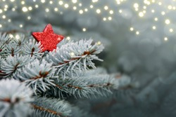 Christmas winter background with red star,lights and blue pine.