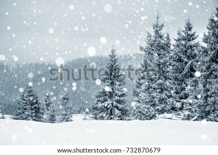 Christmas winter card with fir trees and snowflakes. Christmas greetings concept  #732870679