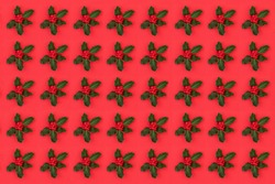 Christmas & winter holly with berries repeat pattern on red background. Seasonal design for winter, Xmas & the New Year.