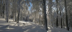 Christmas winter landscape,snowy trees,fresh powder snow,backlit tree branches with rime,mountain forest,cross country track,blue sky in background.Panoramic image.Suchy vrch,Czech Republic.