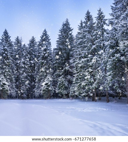 Christmas winter landscape, spruce and pine trees covered in snow on a mountain road #671277658