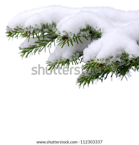 Christmas winter snowy background with spruce branch
