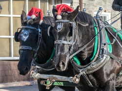 Christmas Work Horses Drawn Carriage