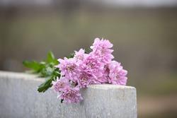 Chrysanthemum flowers on light grey granite tombstone outdoors. Funeral ceremony
