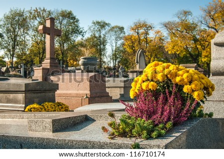 chrysanthemums on the tomb in a graveyard