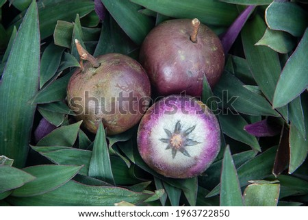 Chrysophyllum cainito,tar apple,star apple,purple star apple,golden leaf tree,abiaba,pomme de lait,estrella,milk fruit, aguay  Foto stock ©