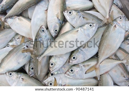 chub mackerel,fresh fish from sea market