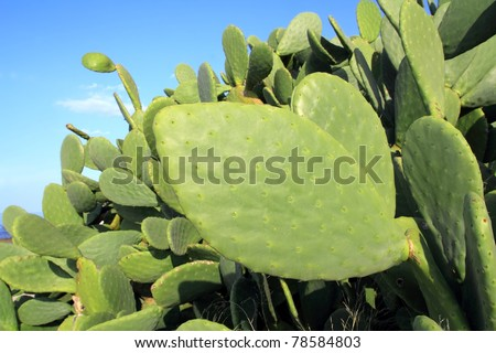 Click Here for nopal cactus
