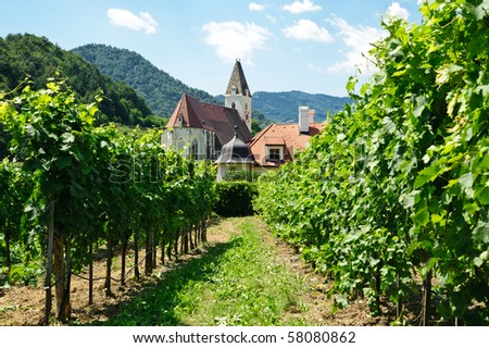Church between Vine Branch, taken in Wachau, Lower Austria