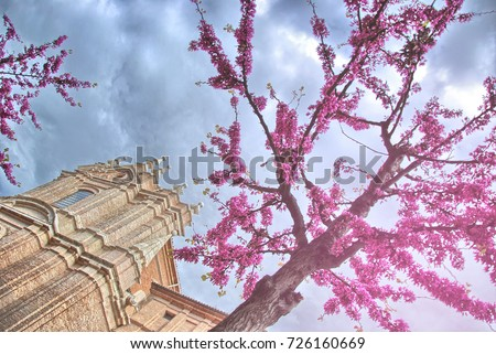 Church under almond trees