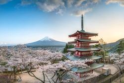 Chureito Pagoda and Mount Fuji with cherry blossom during spring season, Fujiyoshida, Japan