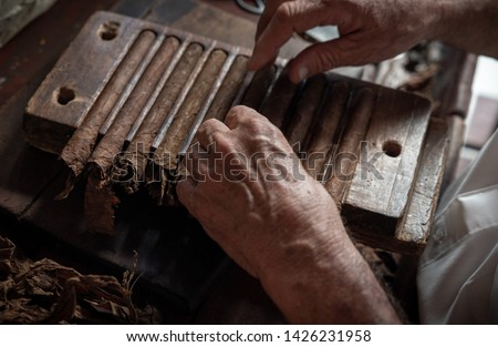 Cigar rolling or making by torcedor in cuba, Pinar del rio province #1426231958