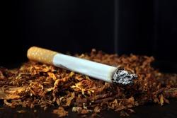 Cigarette. Cigarette and tobacco leaves on black close-up. Selective focus. Bad habits