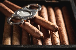 Cigars with guillotine cuts off cigars tip in humidor