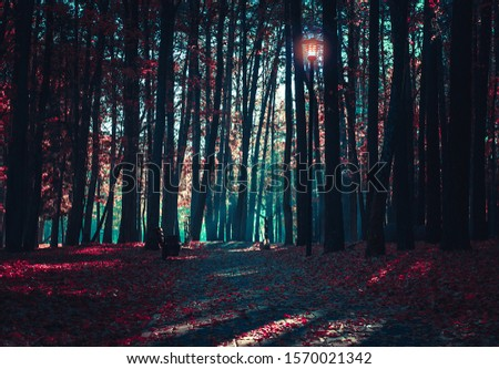 Cinematic Processing. Mysterious road. Fairy Forest. Mystical atmosphere. Paranormal another world. Stranger forest in a fog. Dark scary park with red leaves. Background wallpaper.