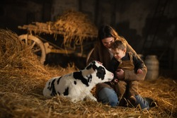 Cinematic shot of happy mother farmer is showing to her toddler baby boy how to feed from bottle with dummy ecologically grown newborn calf used for biological milk product industry in cowshed stable