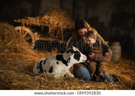 Cinematic shot of happy mother farmer is showing to her toddler baby boy how to feed from bottle with dummy ecologically grown newborn calf used for biological milk product industry in cowshed stable  Foto stock ©