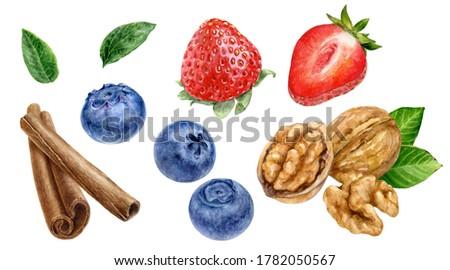 Cinnamon sticks blueberry raspberry walnut watercolor illustration isolated on white background
