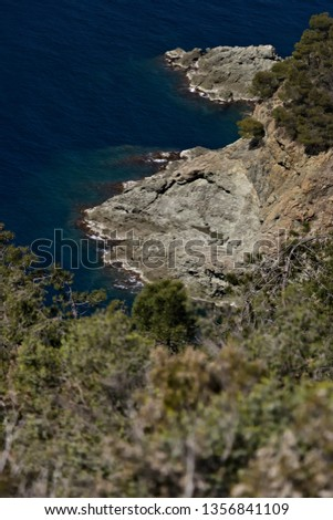 Cinque Terre, Liguria, Italy. A sea cliff with vegetation. A vegetation made up of pines and Mediterranean scrub above the sea of the Five Lands. #1356841109