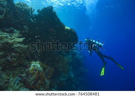CIRCA 2010 Scuba divers at Tukang Besi Marine Preserve, pristine reefs near Wakatobi Diver Resort, South Sulaweso, Indonesia, S.E. Asia #764508481
