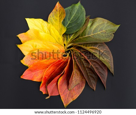 Circle of colorful leaves #1124496920