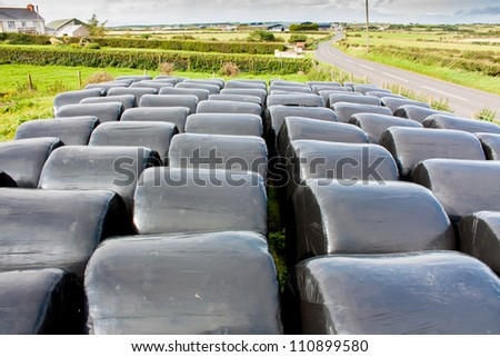 Circular Bales of Hay wrapped in black colored Plastic stored for later use