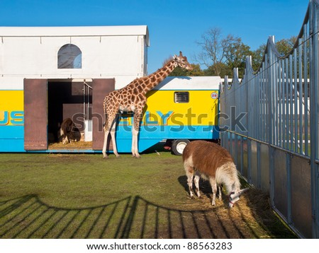 Circus animals in their enclosure - stock photo
