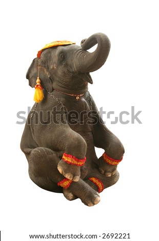 Circus elephant in seated position.