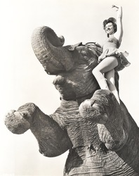 Circus performer posing on elephant
